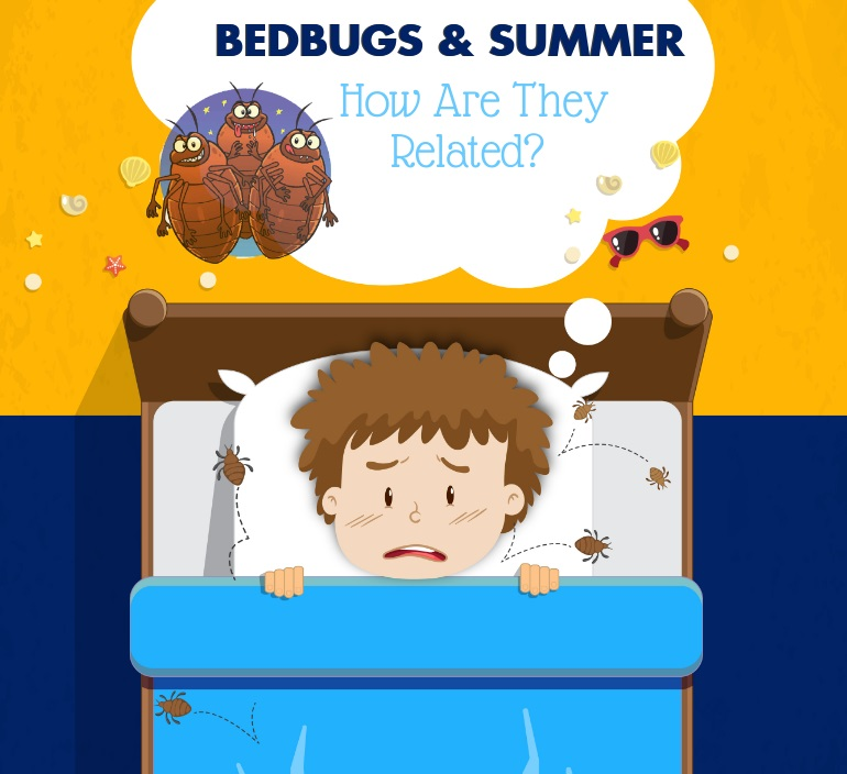Image showing bed bug removal edmonton